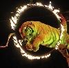 Цирки в Медвенке